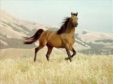 Design-Horse on Hill